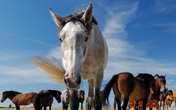 dřu jako kůň