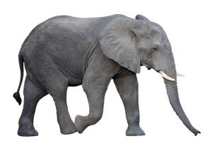 Průměrnost je jako slon